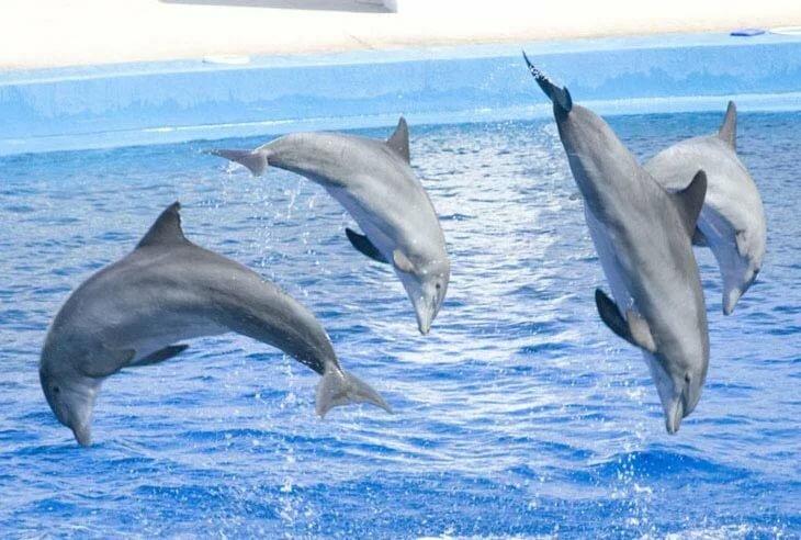 дельфин картинка в книжке обещала