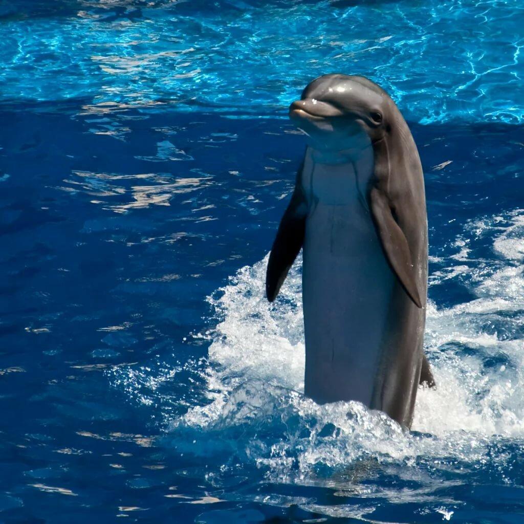 картинки на телефон дельфинчики
