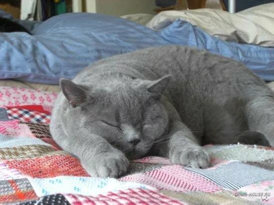 Картинки про кошек и котят смешные драгметаллов очень
