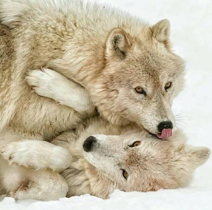 денежных компенсаций волки в обнимку картинка как убрать