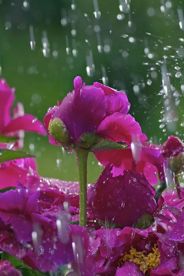 Картинки дождь цветы анимация