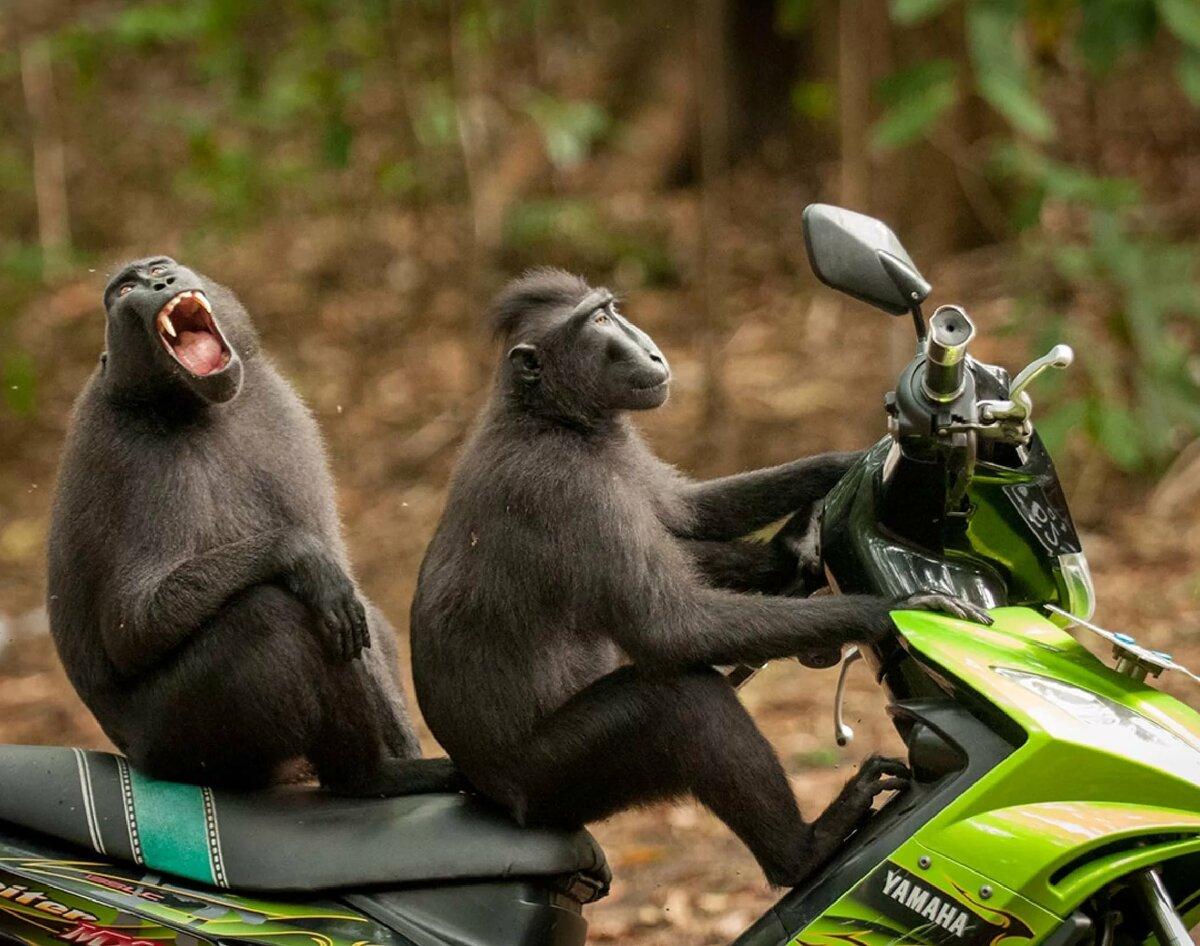 Днем рождения, очень смешные картинки с животными