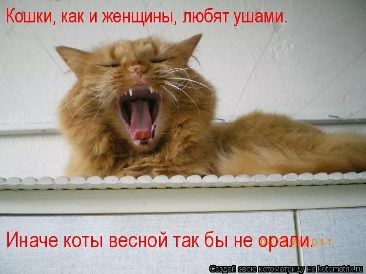 жить картинки про мартовских котов с юмором рисунков пленки