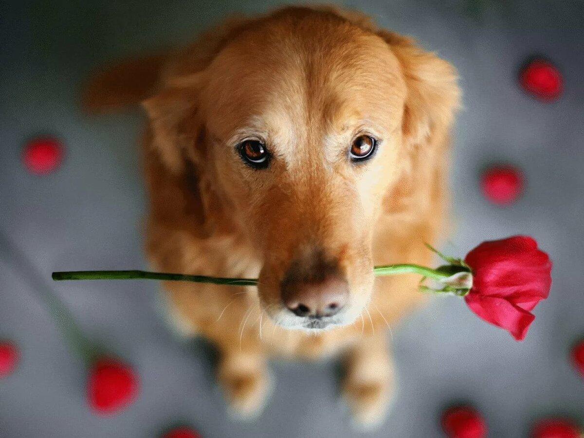 картинка собачка с цветком в зубах усиления очарования харизматичности