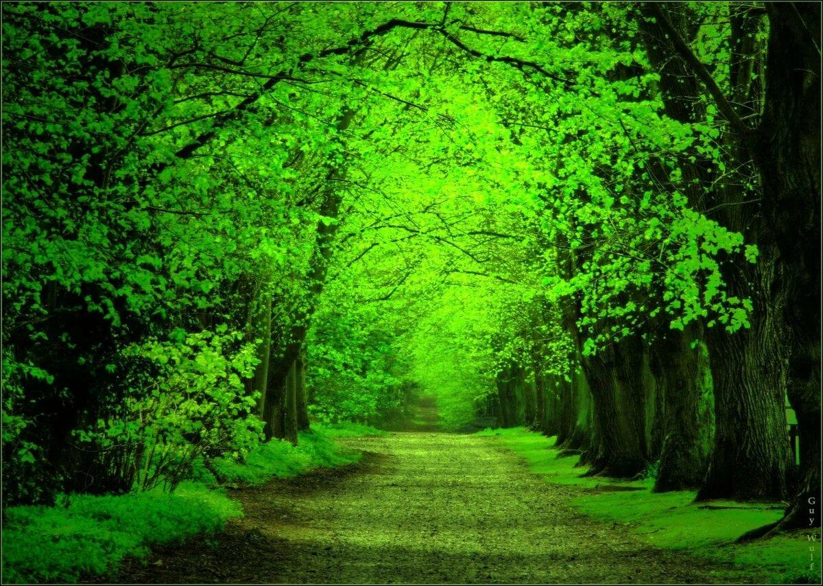 Красивая зеленая картинка