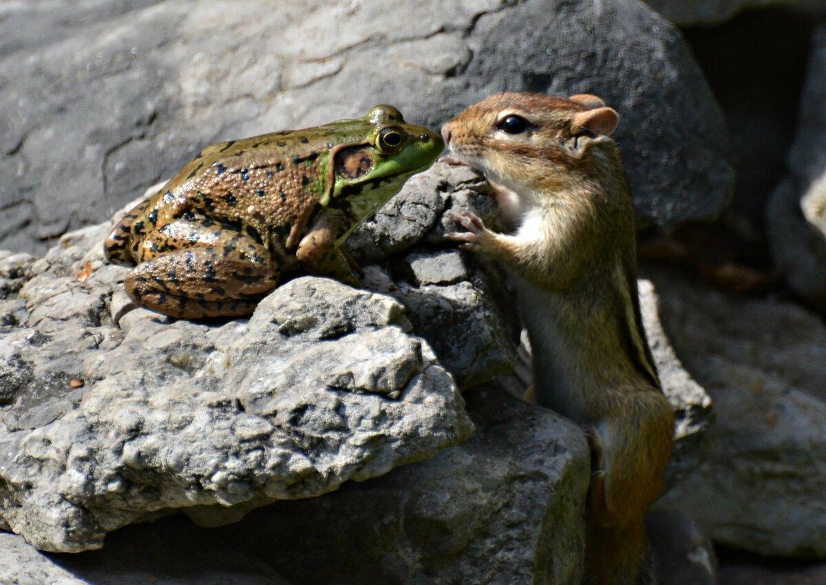 Прикольные фото и картинки о животных, среда поздравление тридцатилетием