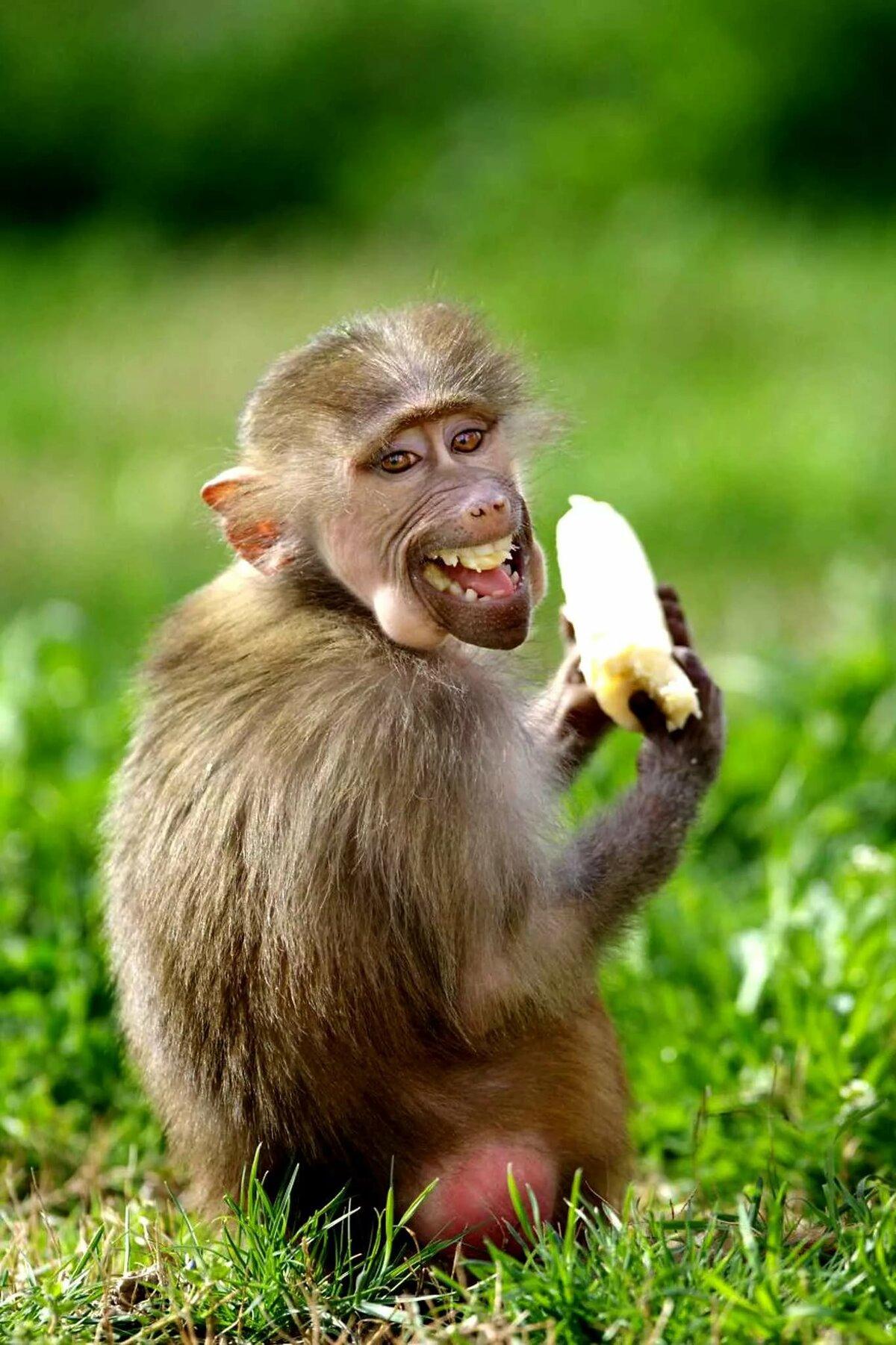 Прикольные картинки смешные с животными, днем