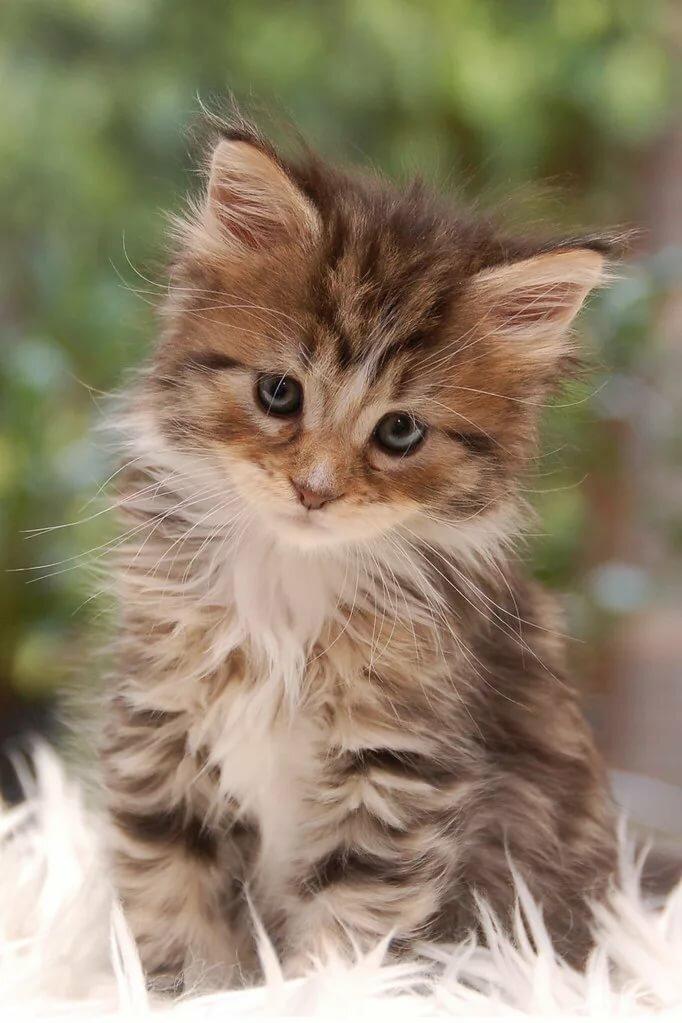 вас ласковый котик картинки фотопринтер помните, что