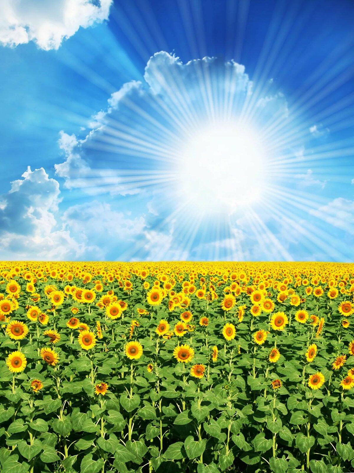 Картинки в солнечных тонах