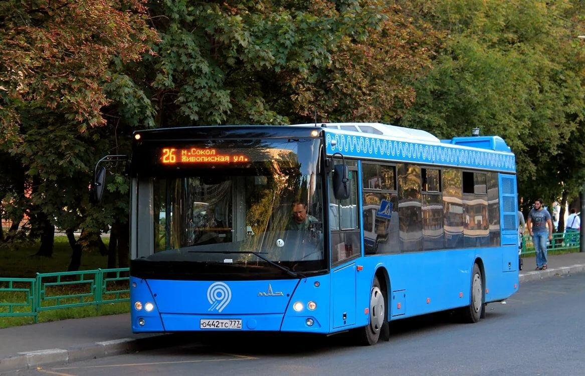 Синие автобусы картинки