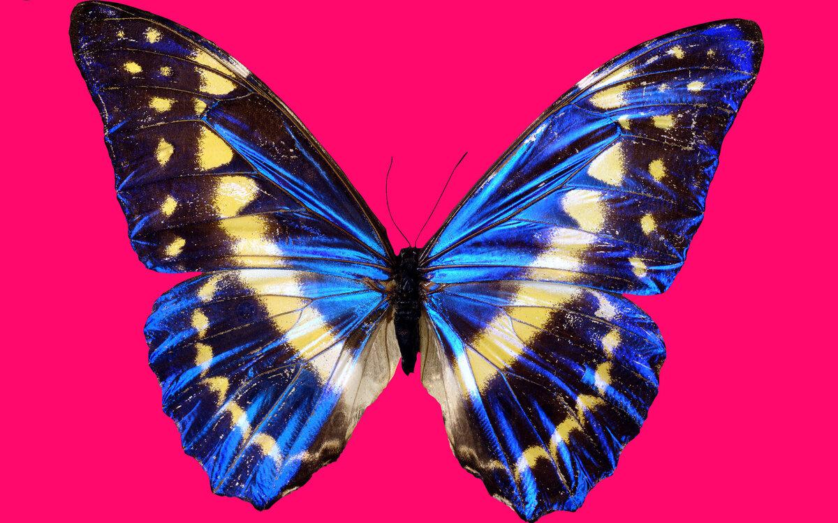 Бабочка картинка большая