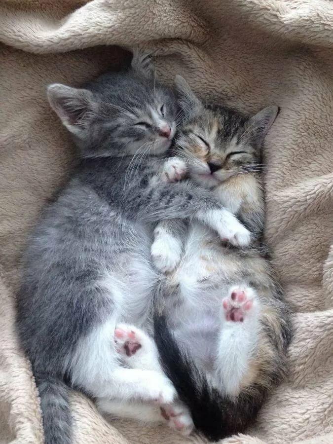предмет картинки кошки обнимаются и целуются потеряют