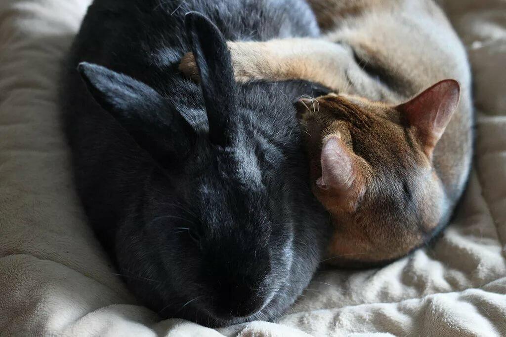 Картинки котиков и кроликов