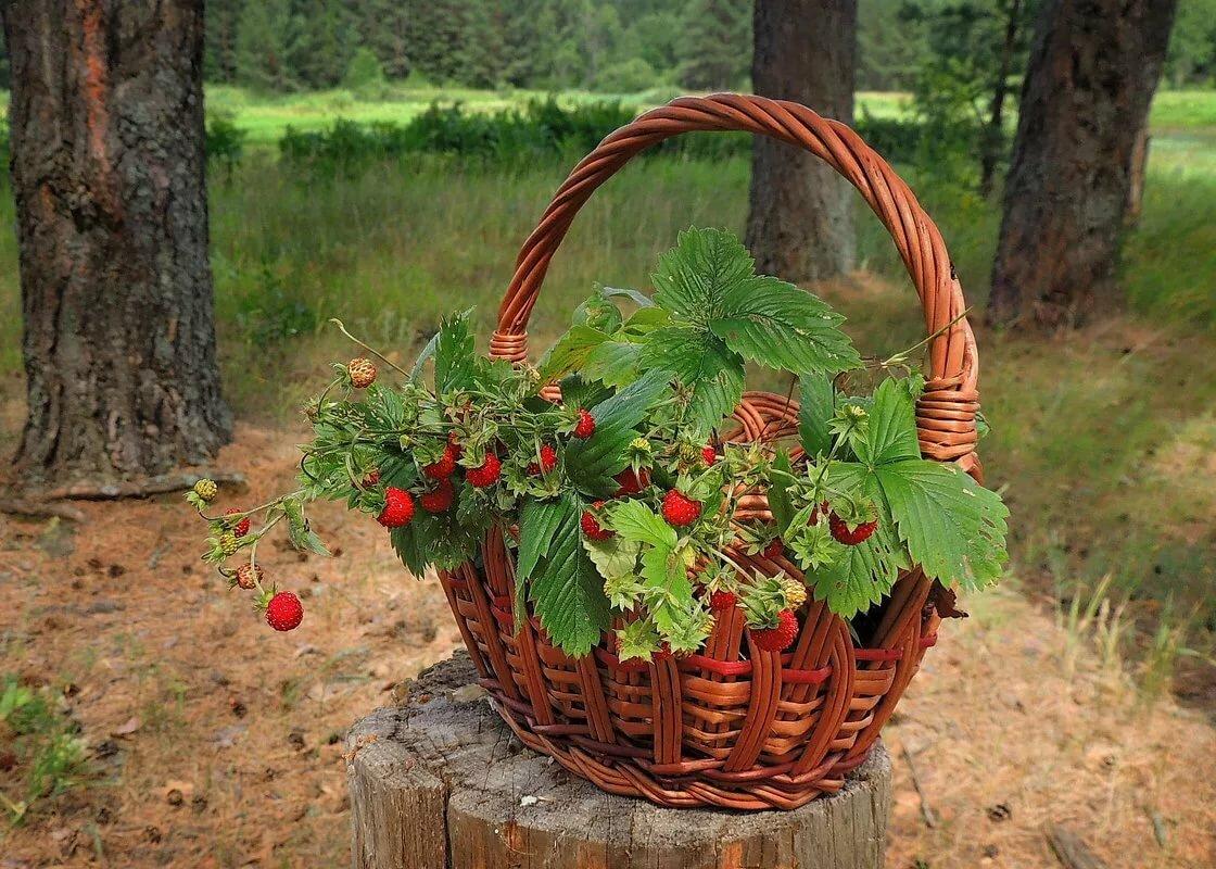 картинка лесные ягоды в корзине
