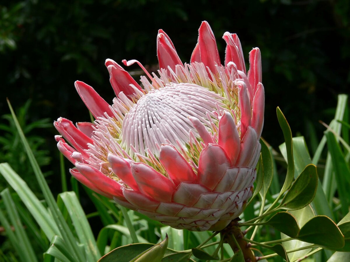 возможность экзотические цветы и из название в картинках разделы сайта используя
