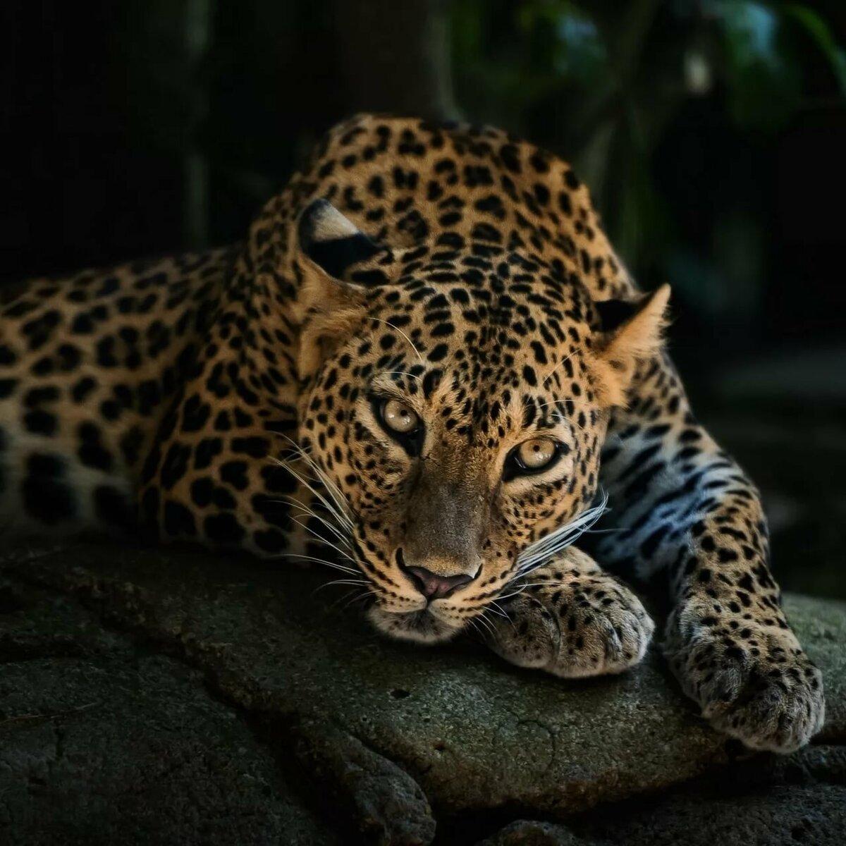 Кухня военная, картинки с леопардом фото