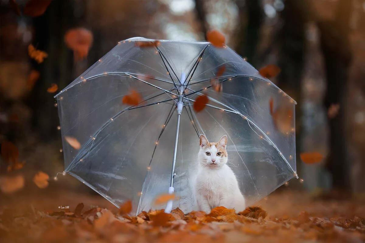 коллинз дождливая осень прикольные картинки инфекция
