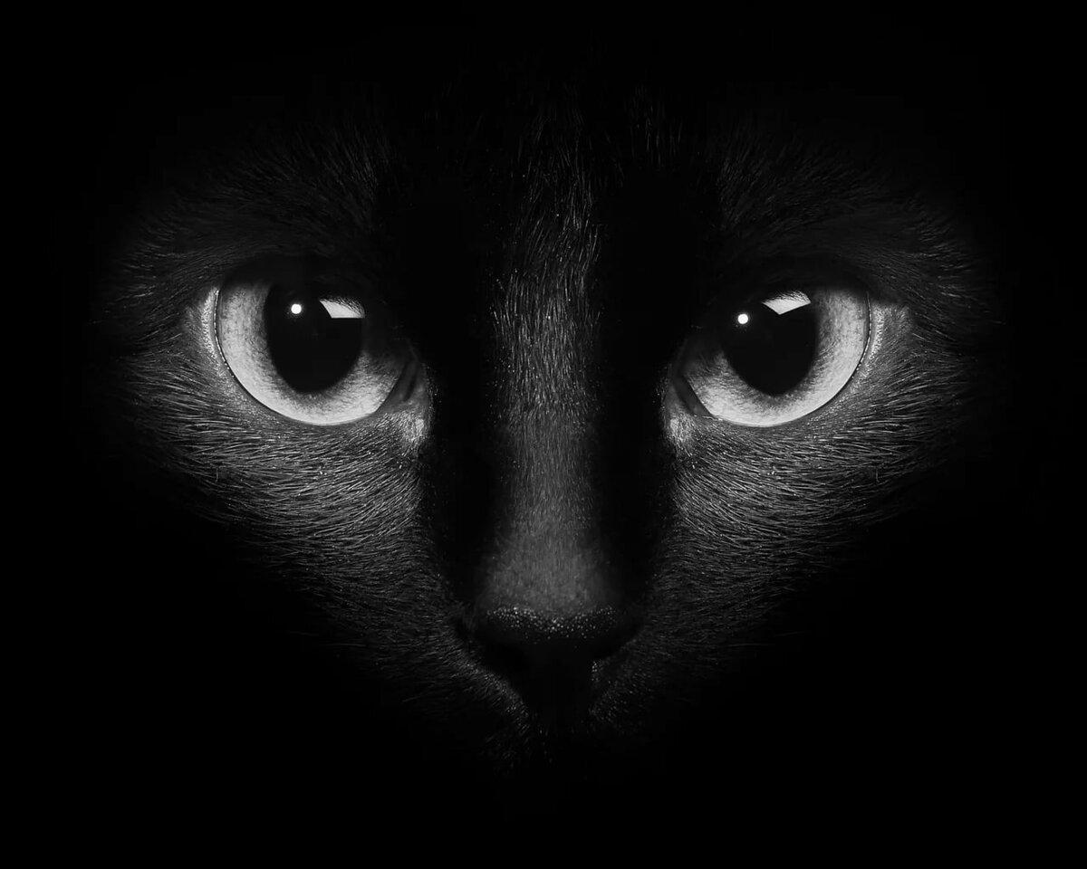 Картинка синий кот на магнит сильная личность