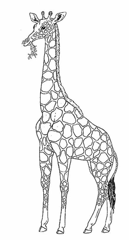 картинки для рисования жирафа деревья