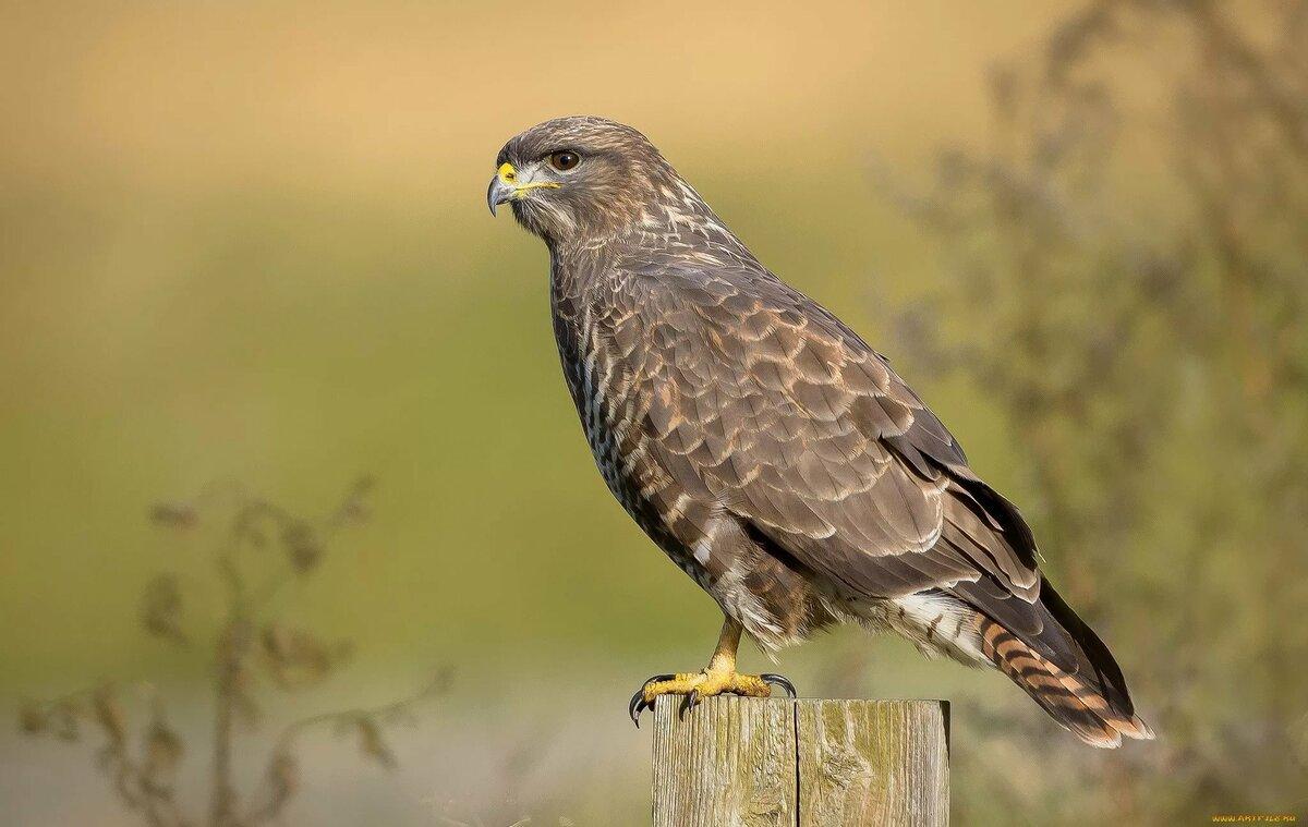 престол хищные птицы воронежской области фото с названиями серия