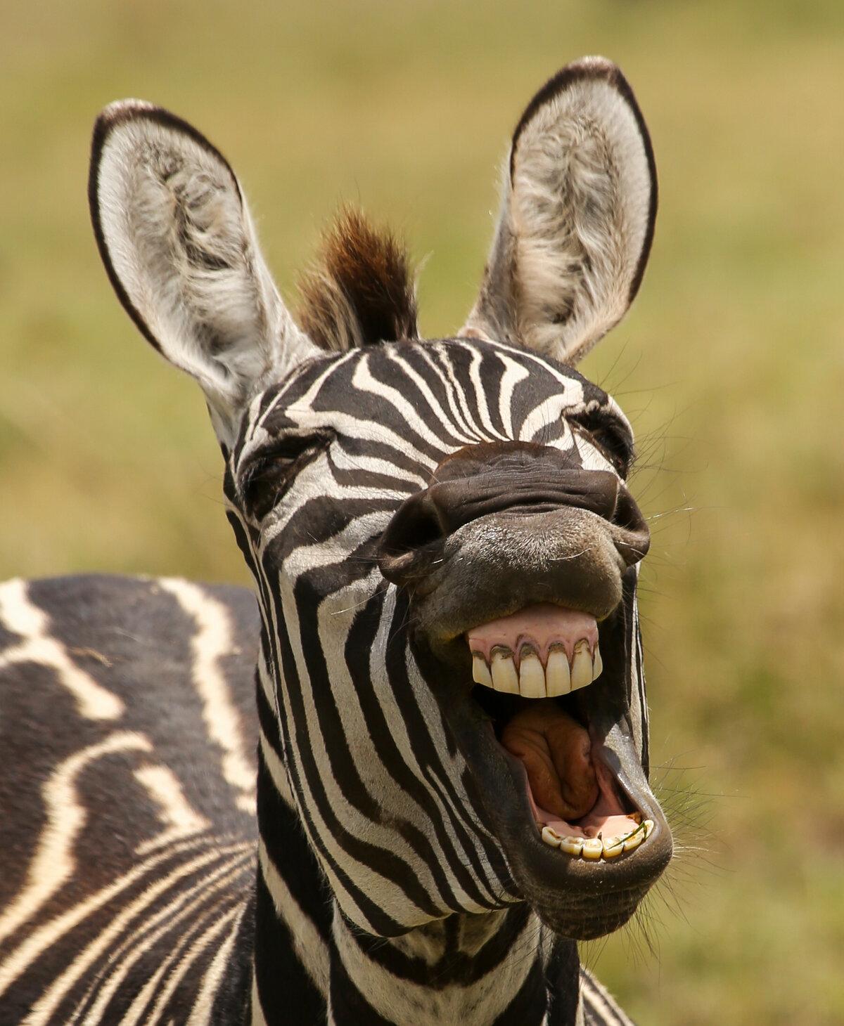 Смотреть прикольные картинки о животных, добрым утром мужчине