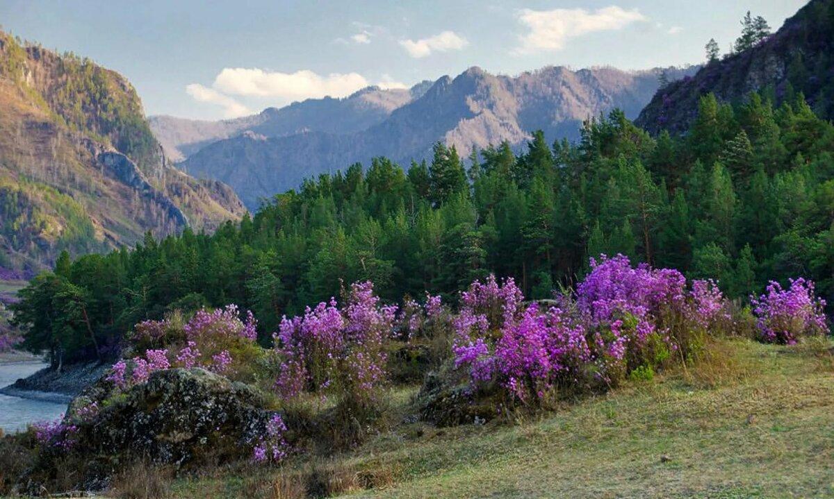конкурсанту был фото весенних горных пейзажей шарик