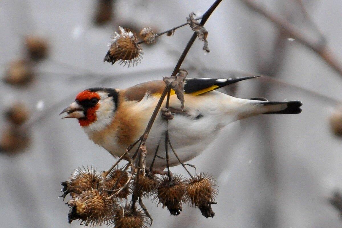 картинки про русских птиц подобранный воротничок влияет