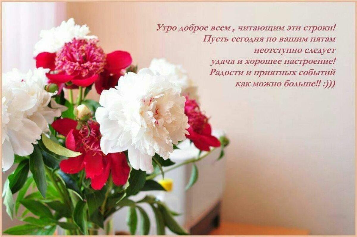 Пионы стихи поздравления