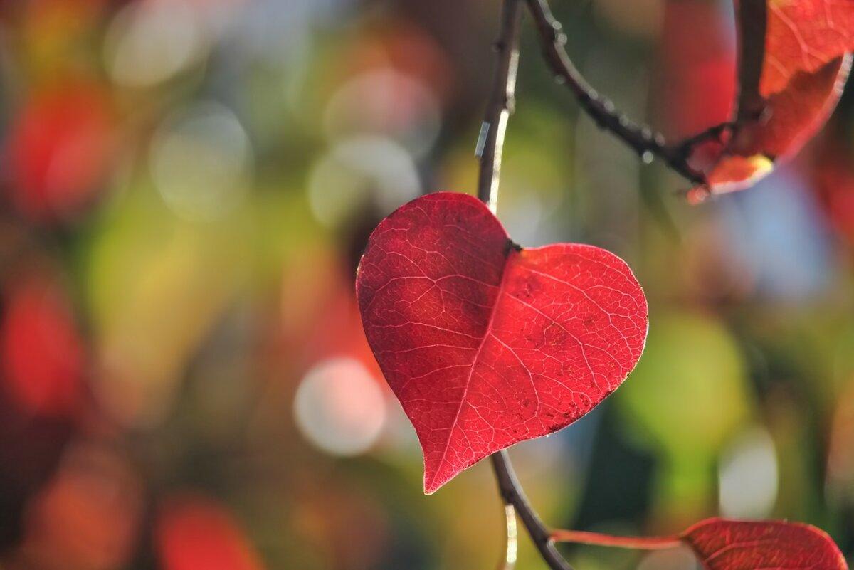 Картинка осеннее сердце