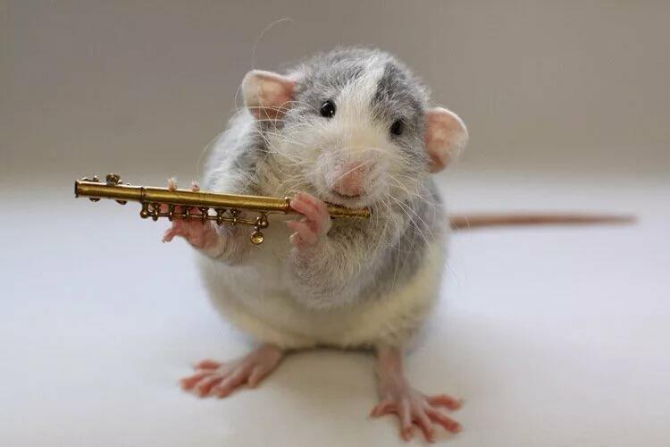 Поздравление старым, приколы картинки мышки