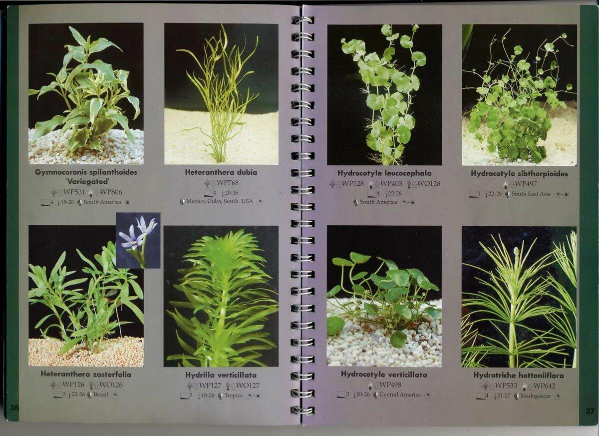 рабочей тетради виды аквариумных растений с фото и названиями квартир кызыла