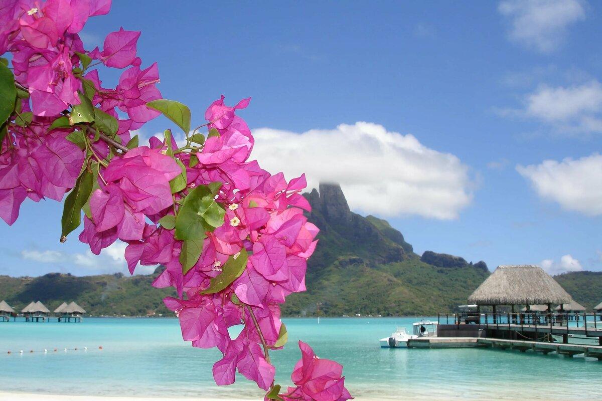 Картинка с морем цветов, картинки благодарю