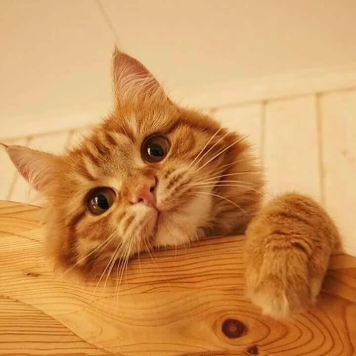 Pin by Mya bell on Other Friends Cats, Orange cats, Kittens cutest