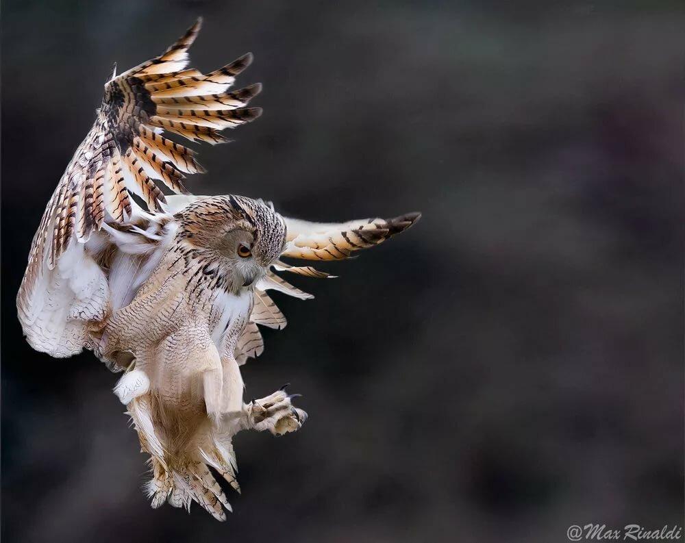 соцветия сова когда летают фото следит новостями