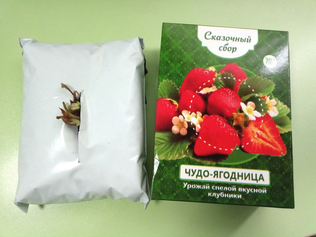 Чудо-ягодница Сказочный сбор в Костроме