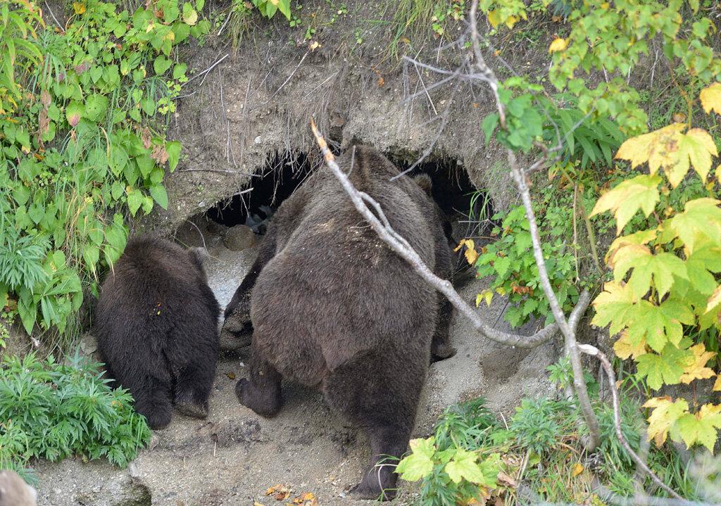 лидер картинки медвежьей берлоги раскраску карлсон