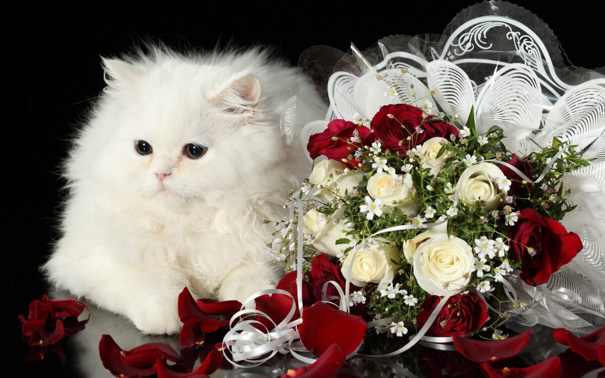 Скрапбукинг балет, открытка для самой красивой девушки с котятами