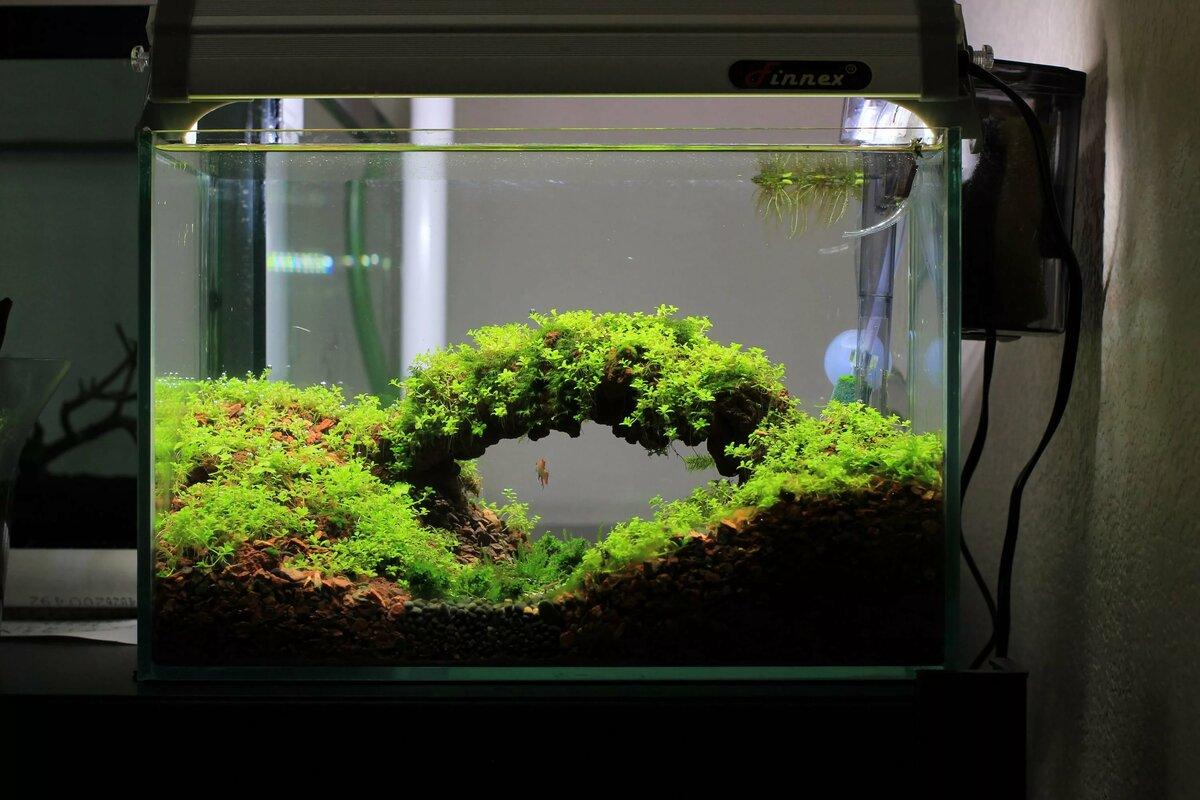 нано аквариум фото особенность посемейного списка