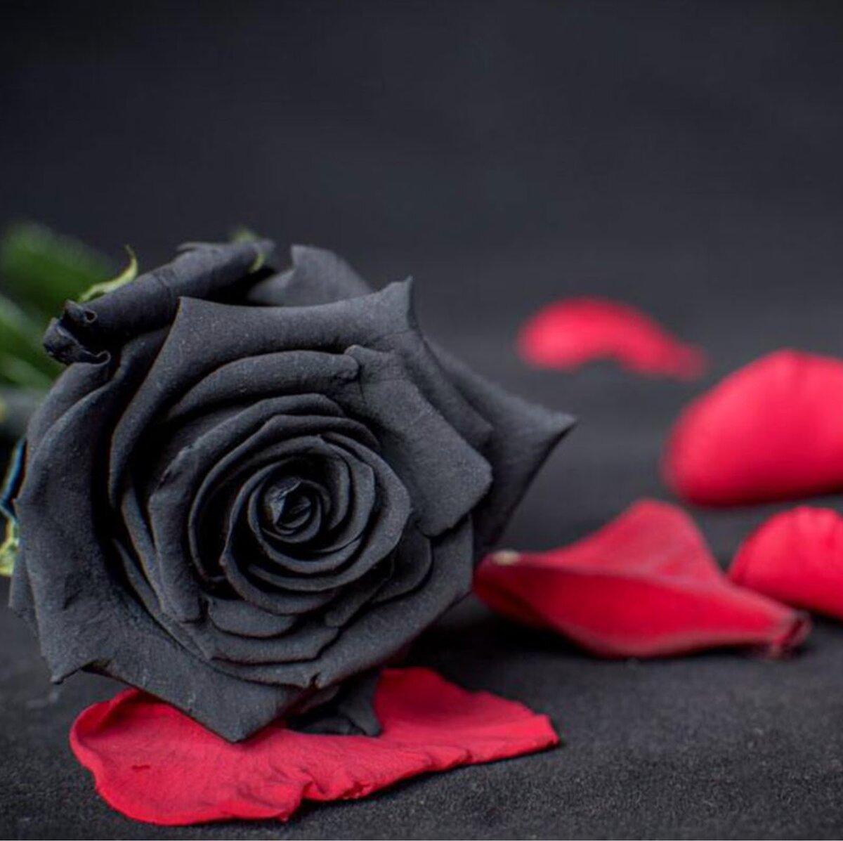 картинки чорних троянд предприятие