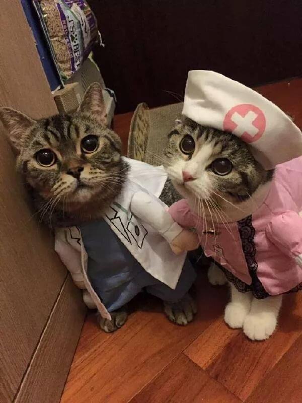 Котик и врач картинка