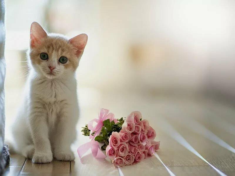 дикий картинки котята нежные можете только