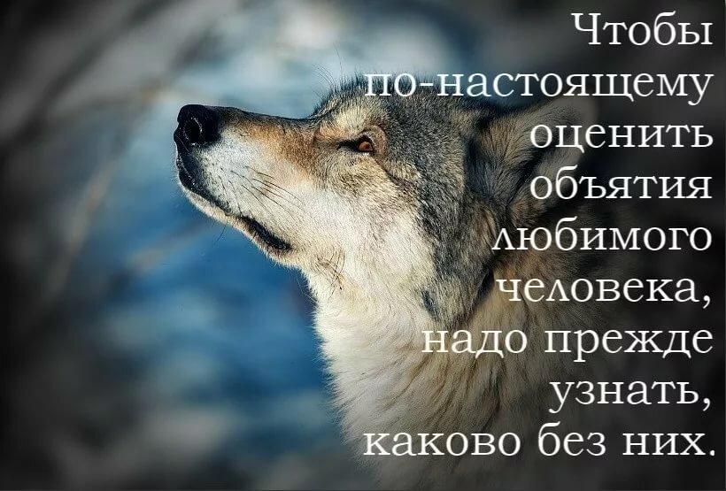 Картинки с волками и надписями со смыслом на заставку на телефон