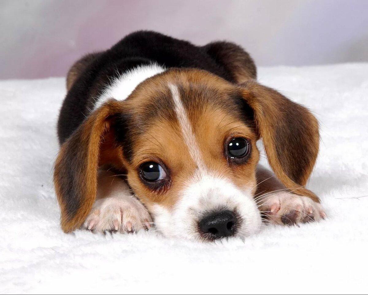 Картинка с надписью породы собак, настя днем рождения
