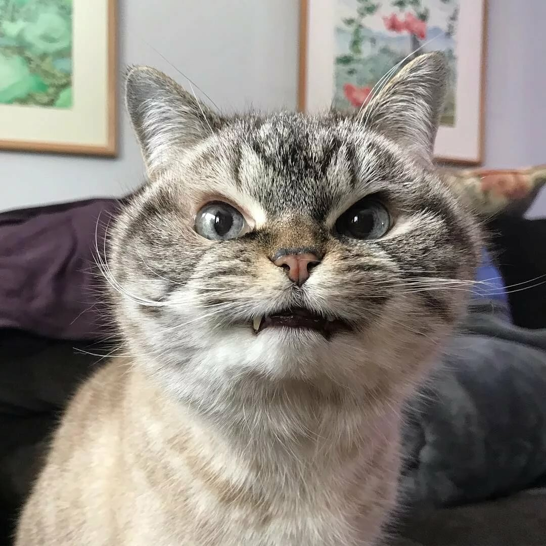 Открытки, прикольные картинки злых кошек