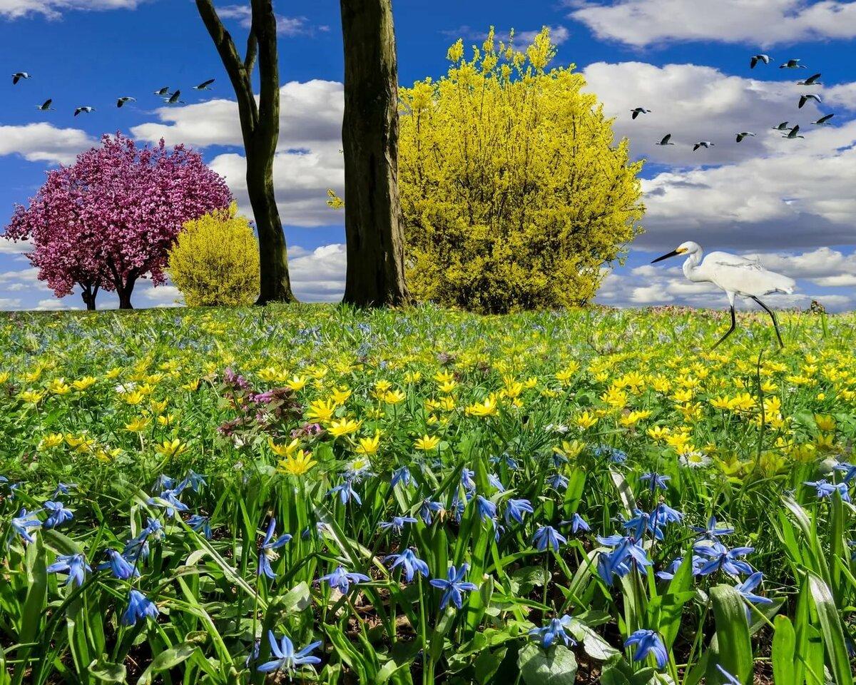 Картинка весеннего луга