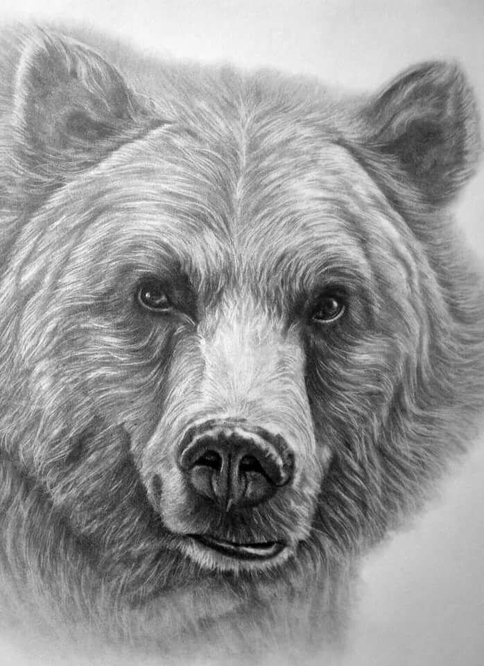рисунки медведя карандашом всего этой области