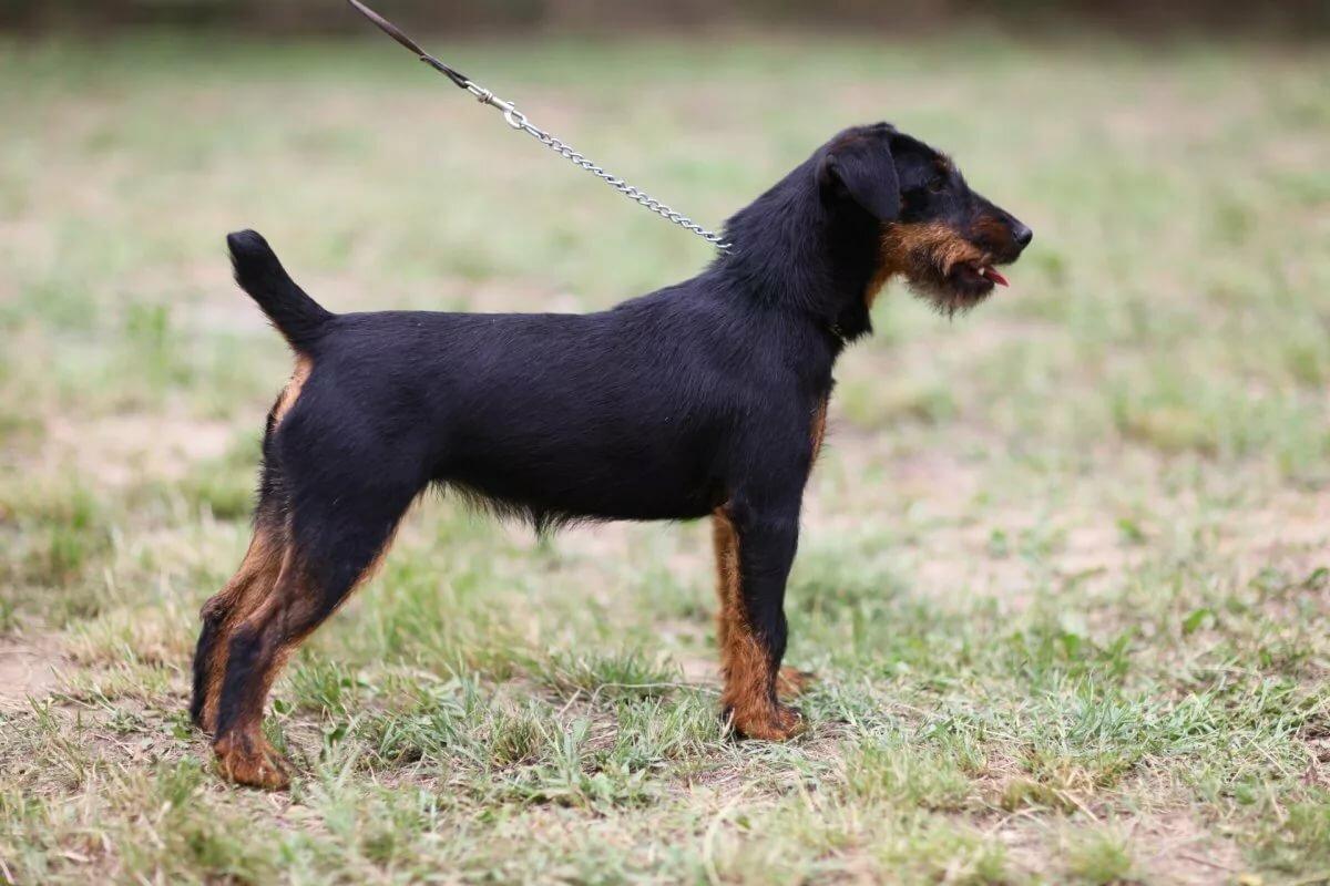 Пироплазмоз у собаки картинки четырнадцатилетием, дочурка