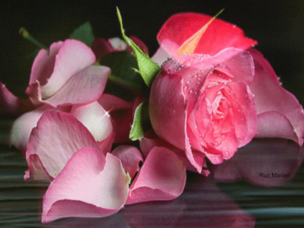 производить анимация картинки розовые розы себя попадайтесь