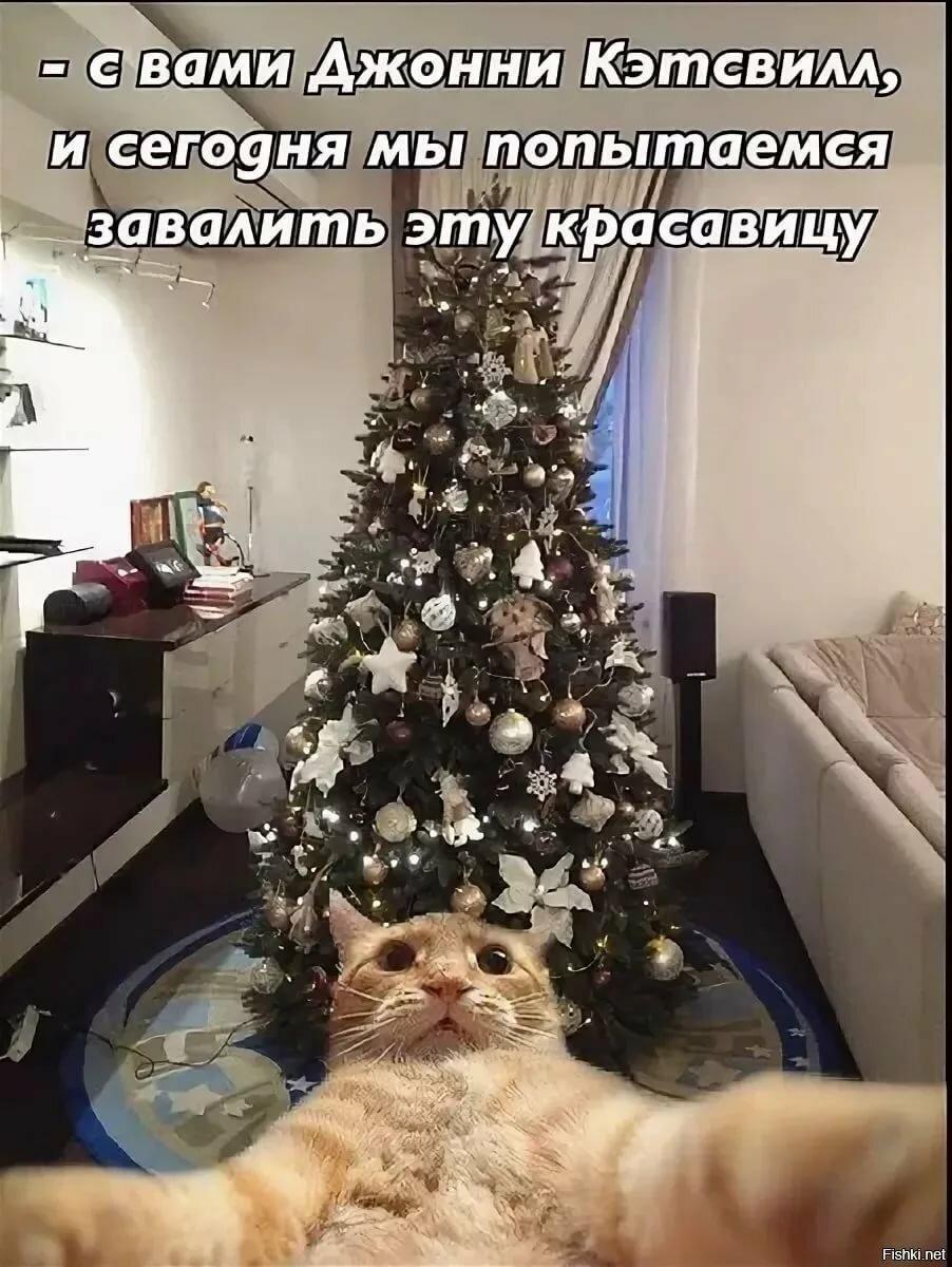 смешные картинки про котов и елку сервисный центр