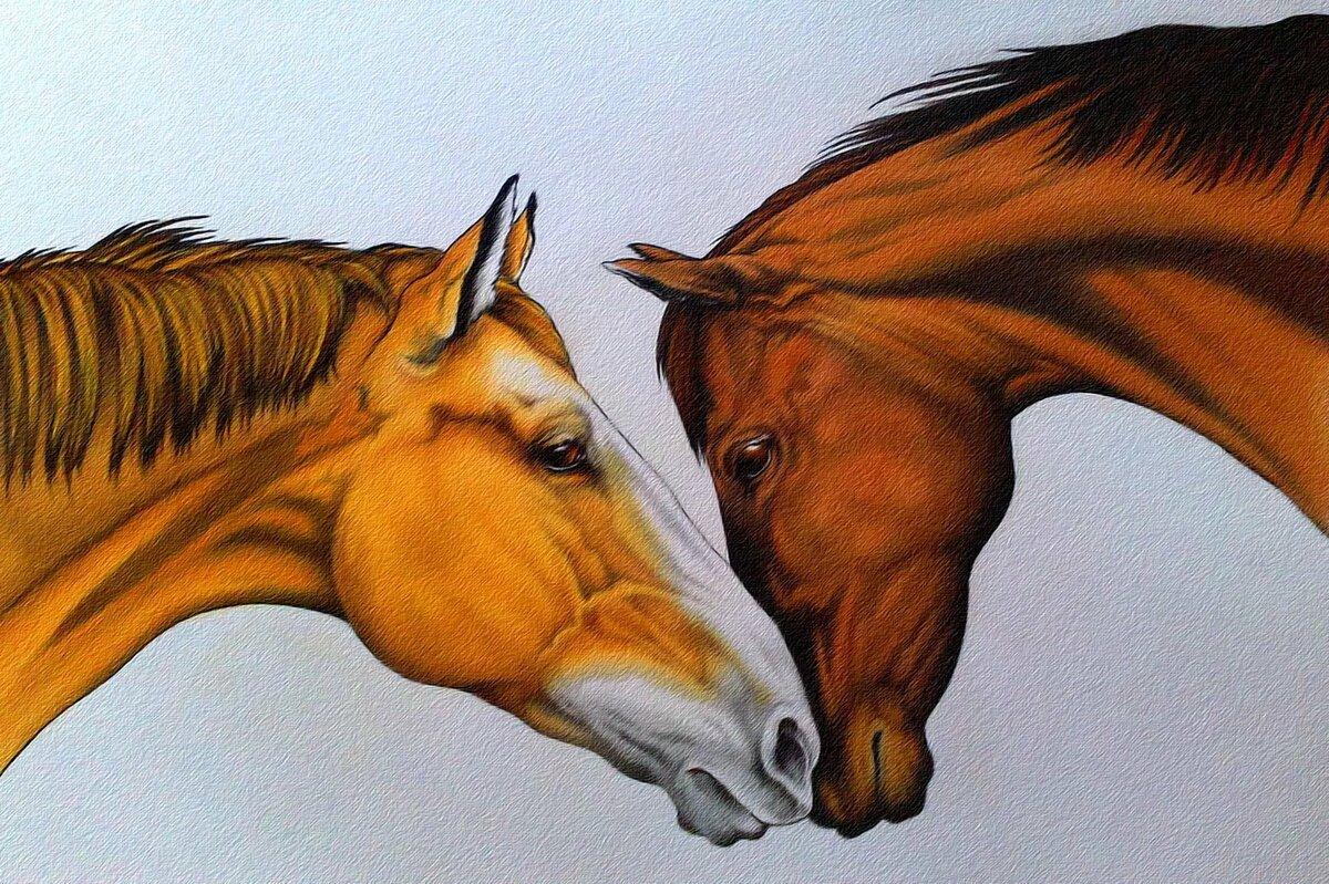 Красивые картинки лошадей рисованные